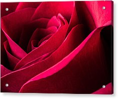 Rose Of Velvet Acrylic Print