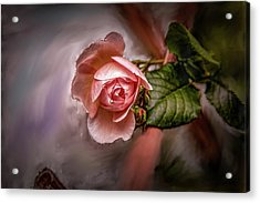 Acrylic Print featuring the mixed media Rose On Paint #g5 by Leif Sohlman
