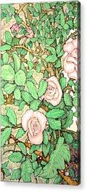 Rose Panel No 1 Acrylic Print by Edward Ruth