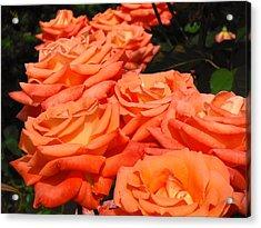 Rose Path Jubilee Acrylic Print