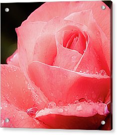 Acrylic Print featuring the photograph Rose Petals And Drops Macro by Julie Palencia