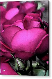 Rose Petals Acrylic Print by Michele Caporaso