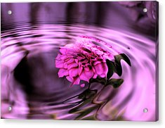 Rose Pool Acrylic Print by Kathleen Stephens