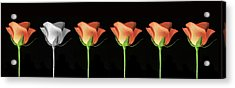 Rose Poster. Acrylic Print by Terence Davis