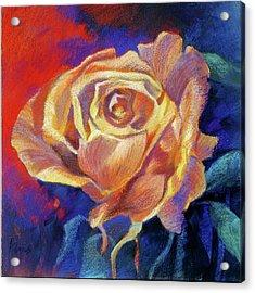 Rose Acrylic Print by Rae Andrews