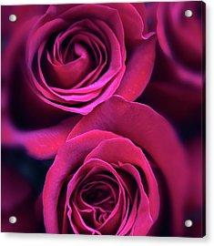 Rose Rapture Acrylic Print by Jessica Jenney