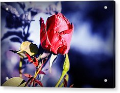 Acrylic Print featuring the photograph Rose by Ryan Smith