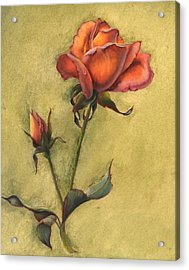Rose Acrylic Print by Sherry Shipley