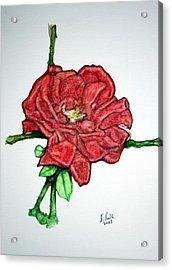 Rose Study No 1 Acrylic Print by Edward Ruth