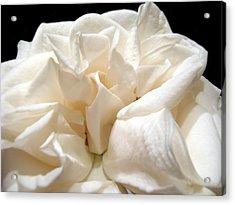 Rose Taffeta Acrylic Print by Nicole I Hamilton