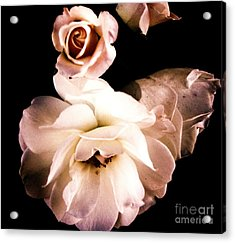 Acrylic Print featuring the photograph Rose by Vanessa Palomino