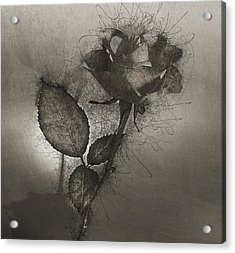Acrylic Print featuring the photograph Rose Variation#04 by Richard Wiggins