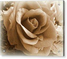 Rose Vignette Acrylic Print