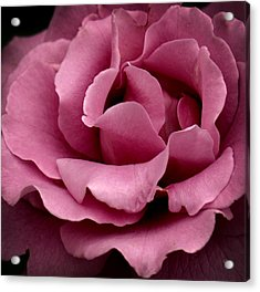Rose Violet Waves Acrylic Print