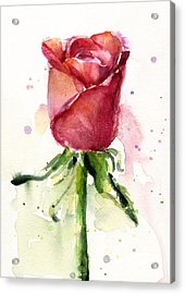 Rose Watercolor Acrylic Print by Olga Shvartsur