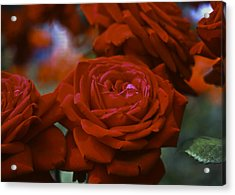 Rose Acrylic Print by Wes Shinn