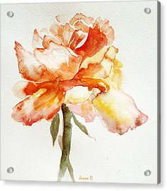 Rose Yellow Acrylic Print