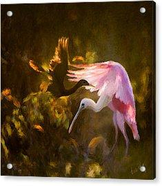 Roseate Spoonbill 0559 Acrylic Print