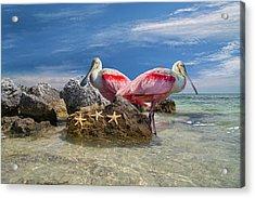 Roseate Spoonbill Florida Keys Acrylic Print