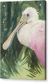 Roseate Spoonbill Acrylic Print by Kris Parins