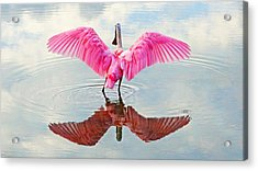 Roseate Spoonbill Pink Angel Acrylic Print