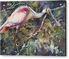 Roseate Spoonbill Acrylic Print by Sue Zimmermann