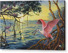 Roseate Spoonbills Among The Mangroves Acrylic Print by Dianna  Willman