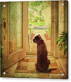 Acrylic Print featuring the photograph Rosebud At The Door by Lewis Mann