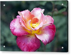 Rosebud Acrylic Print by Don  Wright