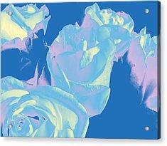 Roses #3 Acrylic Print