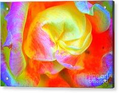 Roses 3 Acrylic Print