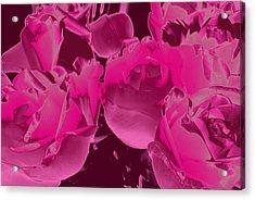 Roses #5 Acrylic Print