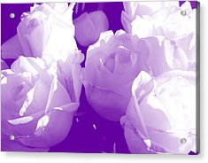 Roses #7 Acrylic Print