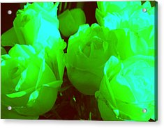 Roses #8 Acrylic Print