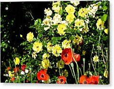 Roses And Poppies Acrylic Print by Teresa Mucha