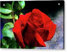 Roses Are Red My Love Acrylic Print by Susanne Van Hulst
