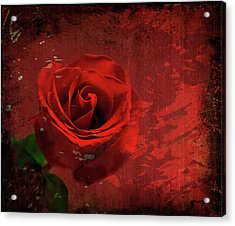 Acrylic Print featuring the photograph Roses Are Still Red by Bonnie Willis
