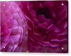 Roses Caressing Acrylic Print by M Valeriano
