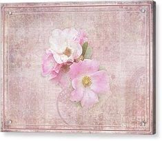Roses Eternal Acrylic Print