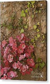 Roses In Spain Acrylic Print