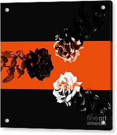 Roses Interact With Orange Acrylic Print