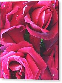 Roses Like Velvet Acrylic Print
