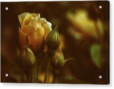 Roses Acrylic Print