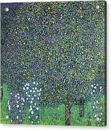 Roses Under The Trees Acrylic Print by Gustav Klimt