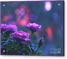 Acrylic Print featuring the photograph Roses With Evening Tint by Lance Sheridan-Peel