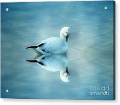 Ross Goose Acrylic Print by Suzanne Handel
