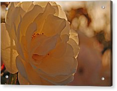 Rosy Afternoon 2 Acrylic Print by Jean Booth