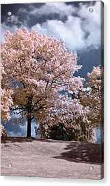 Forever Spring Acrylic Print by Helga Novelli