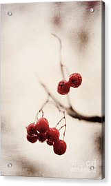 Rote Beeren - Red Berries Acrylic Print