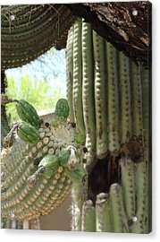 This Cactus Is Rotten To The Core Acrylic Print